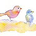 小鳥の親子